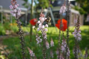 Draag zorg voor de bijen met jouw moestuin