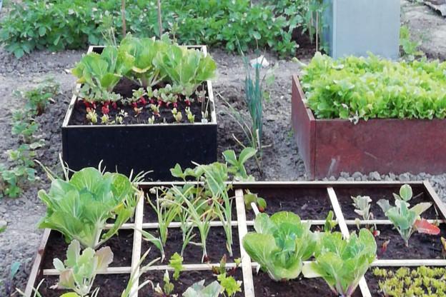 Welke planten- of moestuinbak past bij jou?